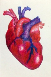 realistic_heart
